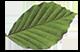 Holztreppen Schreiner Alling Logo